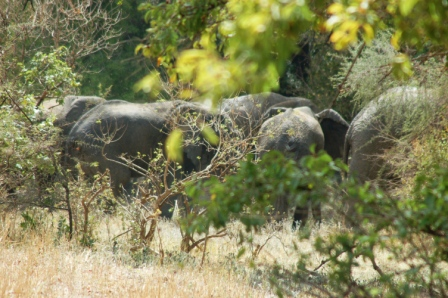 safari_elephant1