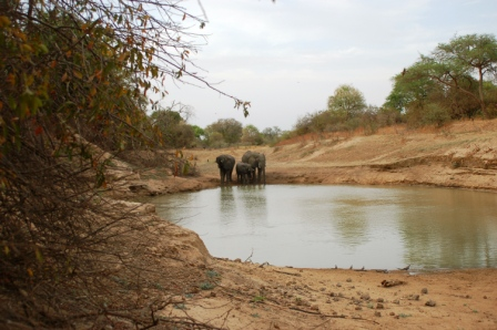 safari_elephant3
