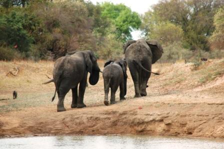 safari_elephant6