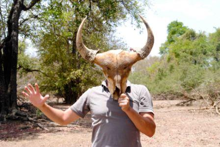 Gazelle non identifiée…