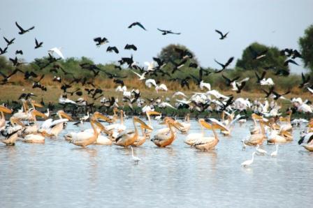 Pélicans et autres oiseaux
