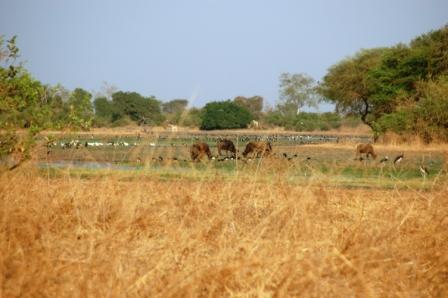 safari_paysage1