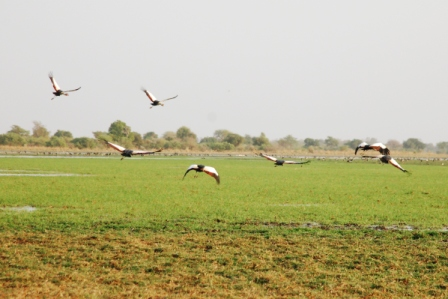 safari_paysage3